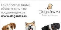 В Петербурге стартовал уникальный проект Dogsales.ru