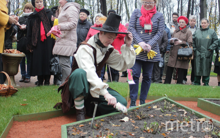 Петербург высадили цветы