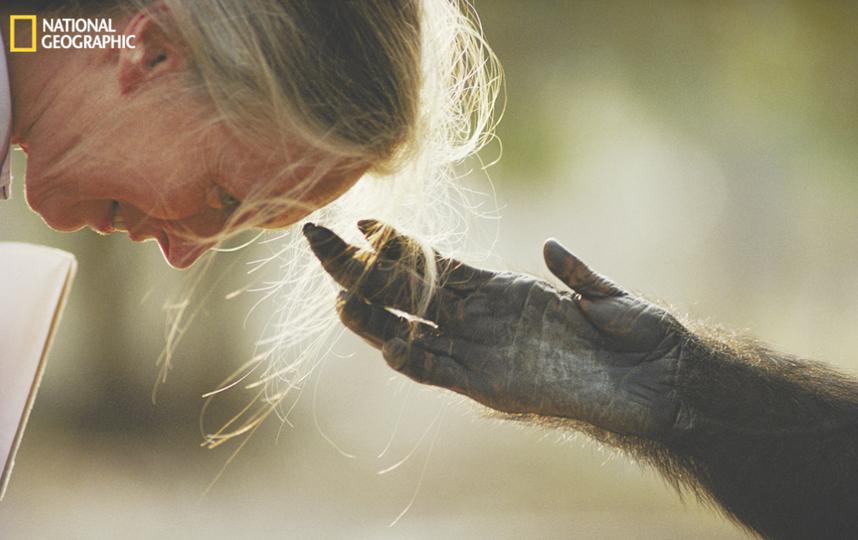 Michael Nichols/National Geographic.