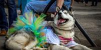 В Новосибирске живут самые модные собаки