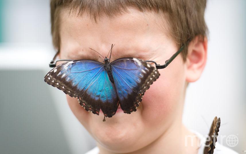 Картинки, смешные бабочки фото