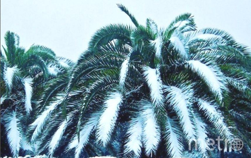 Сочи завалило снегом: фото и видео аномальной зимы делятся местные жители. Фото Instagram - все