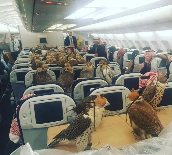На борту самолета находилось 80 соколов. Фото Скриншот Youtube.com