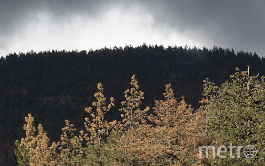 Причиной нововведений стало сильное загрязнение лесов туристами. Фото Getty