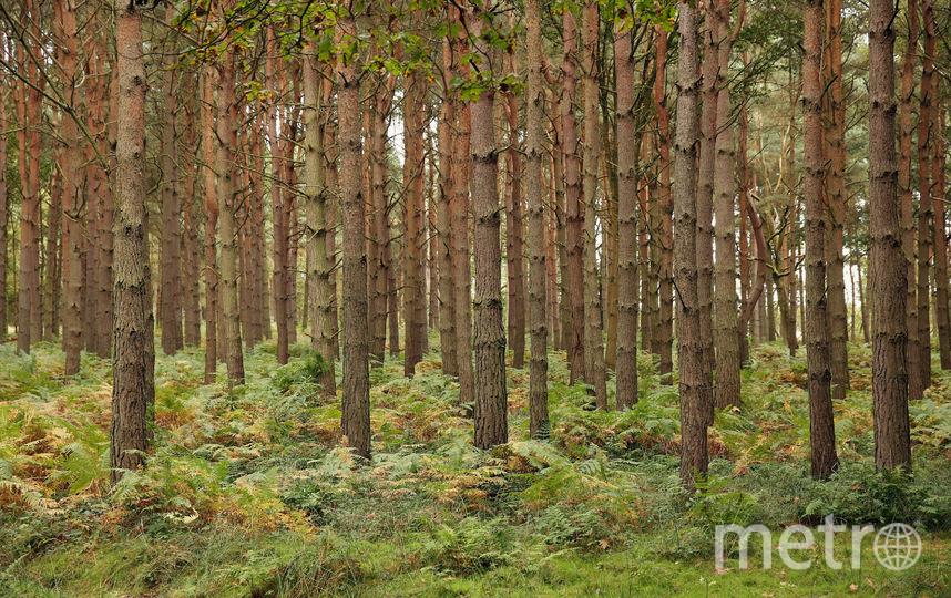 Если примут новый закон, за вход в лес придется платить. Фото Getty
