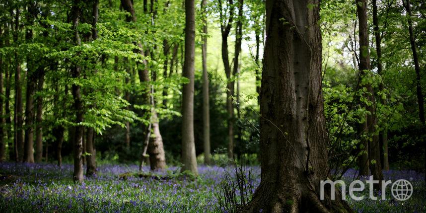 Новый законопроект: за вход в лес придется платить