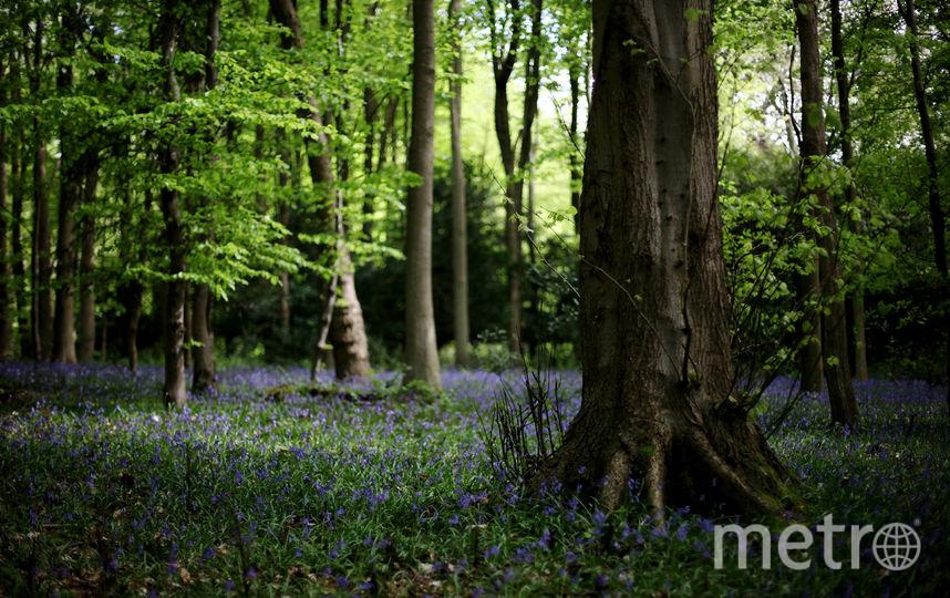 Сумма за вход в лес может составить от 300 до 1500 рублей. Фото Getty