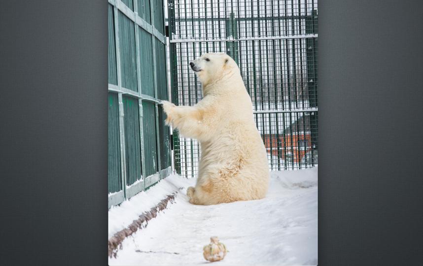 Милана из Москвы улетела в Ганновер. Фото предоставлено московским зоопарком