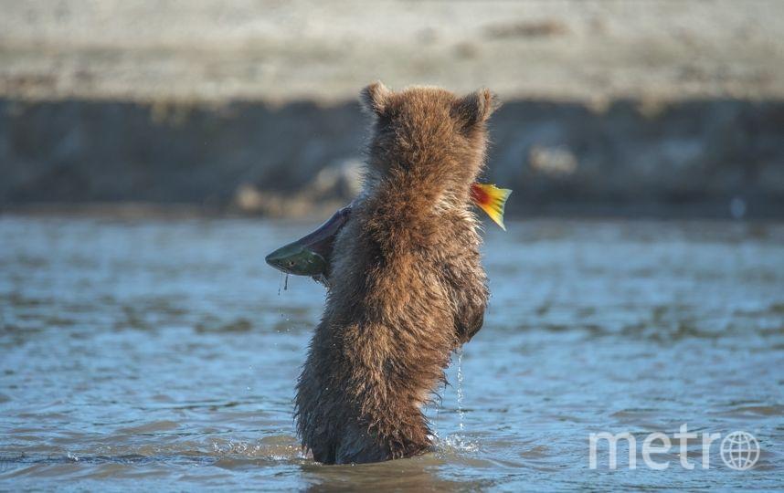 ВАДИМ БАЛАКИН Г. ЕКАТЕРИНБУРГ Юный рыбак. Малыш-сеголетка, возможно, поймал в этом году самостоятельно свою первую рыбу. Курильское озеро, полуостров Камчатка.