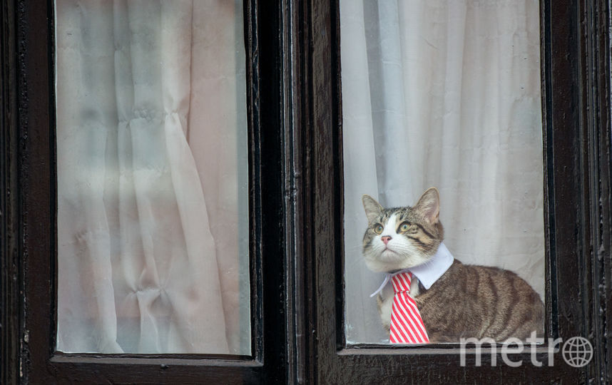 Кот. Фото Getty