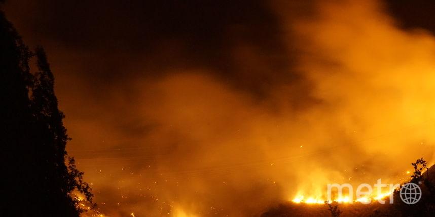Власти Чили оценили вред отлесных пожаров в $333 млн