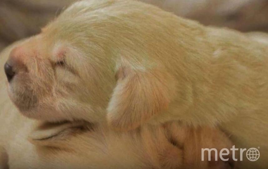 В Великобритании родился зелёный щенок. Фото Скриншот Youtube.com