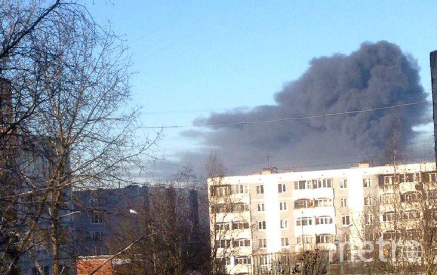 Фото: Сережа Рыбак. Фото vk.com/gatchina47