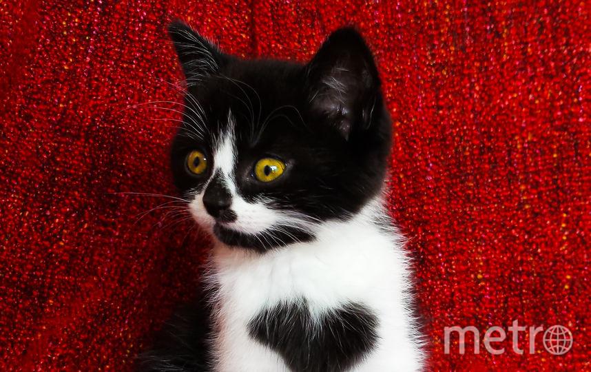 Котёнок Зои. Фото Instagram @izzyandthefluff.
