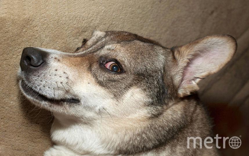 Любимая собака Елены Камбуровой. Фото Фотоархив Елены Камбуровой.