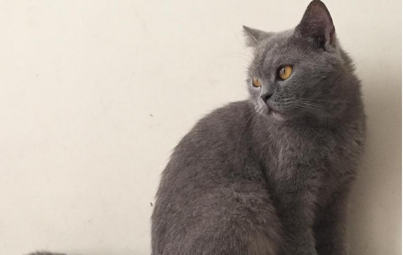 В Малайзии набирает популярность пятизвёздочный отель для кошек. Фото Скриншот instagram.com