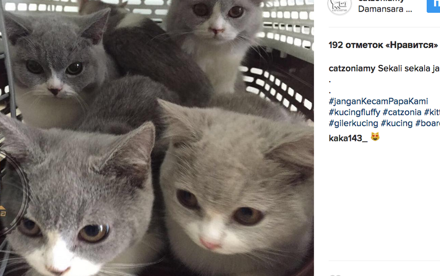 В Малайзии набирает популярность пятизвёздочный отель для кошек. Фото Скриншот instagram.com.