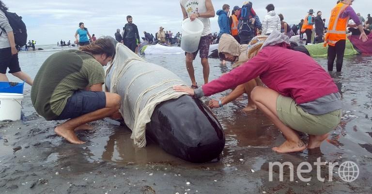 Волонтёры пытаются помочь дельфинам. Фото AFP