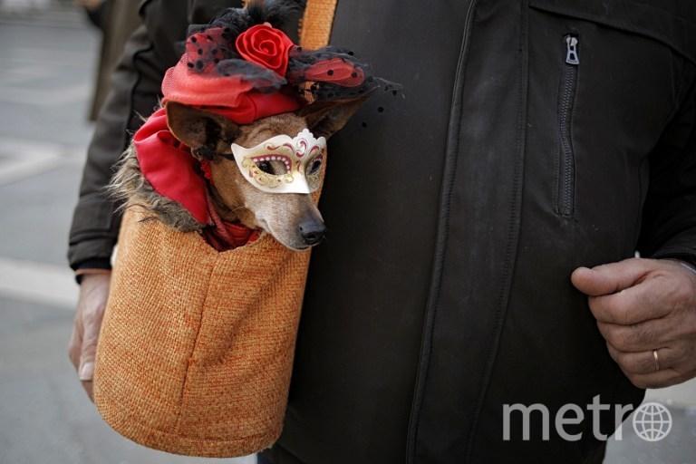 Венецианский карнавал. Фото AFP