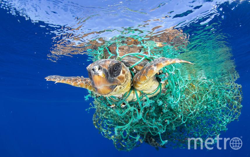 Головастая черепаха в ловушке. Фото Официальный сайт World Press Photo.