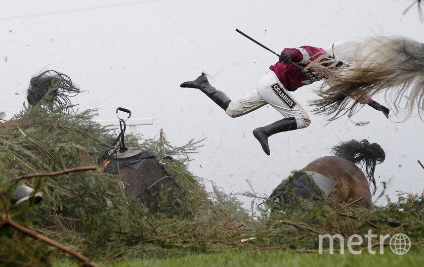 Большой чемпионат по скачкам с препятствиями. Фото Официальный сайт World Press Photo.