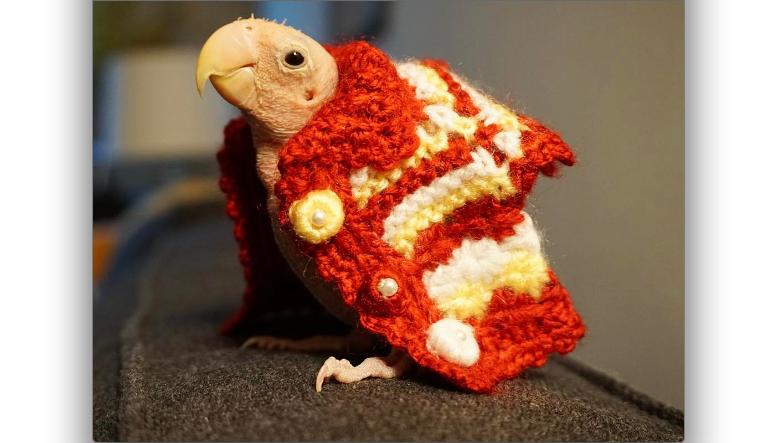 Попугайчик Рея. Фото www.instagram.com/rhea_thenakedbirdie