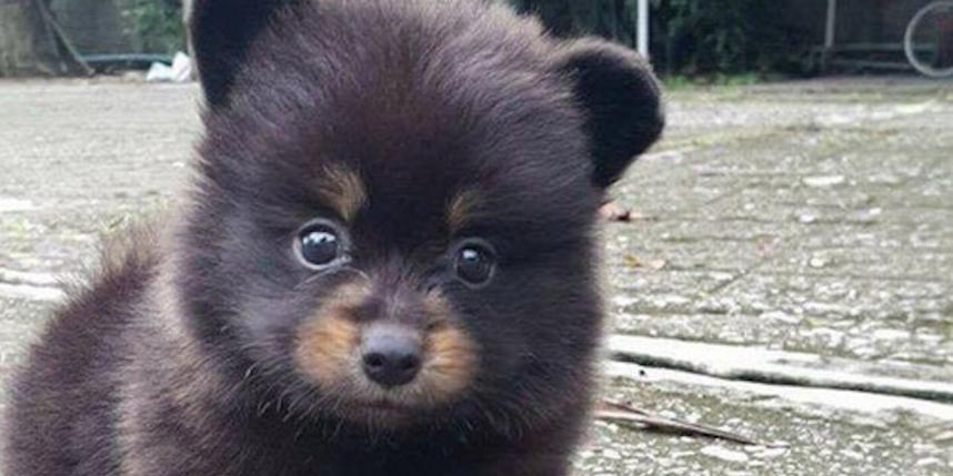 Вглобальной паутине ломают голову над новоиспеченной тайной — Медведь или собачка
