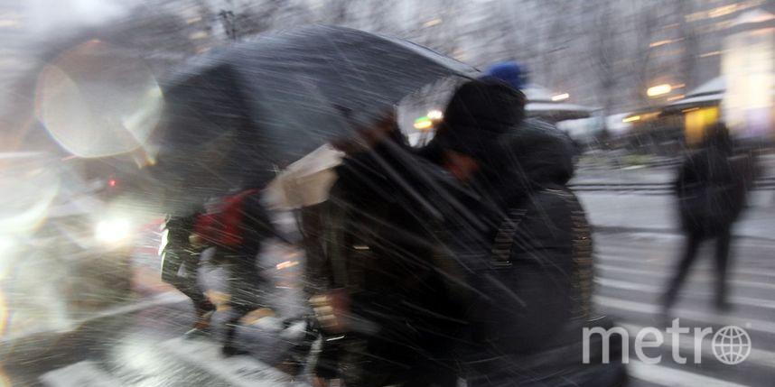 Снежный шторм смокрым снегом останется вПетербурге надень