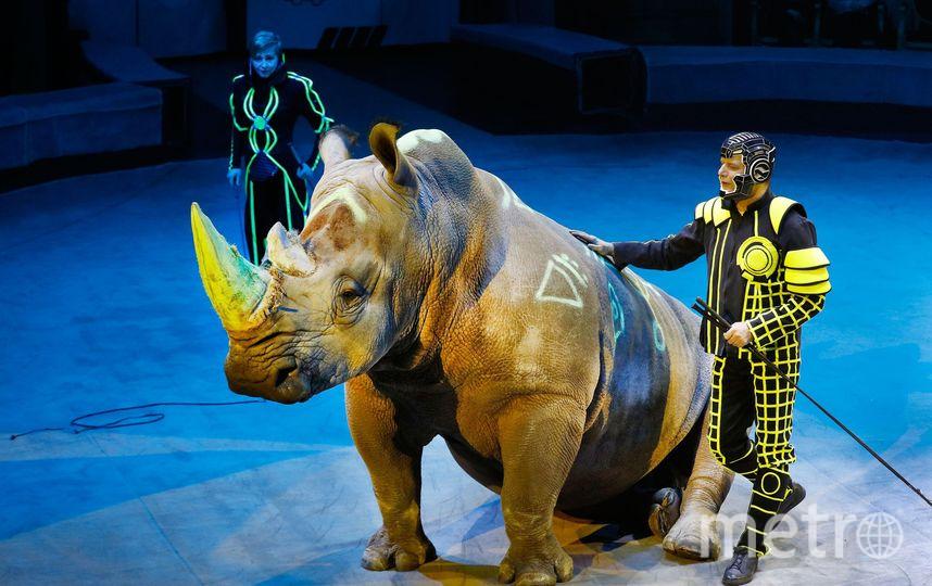 Перед представлением носорога раскрашивают. Фото Предоставлены пресс-службой Цирка на Фонтанке.