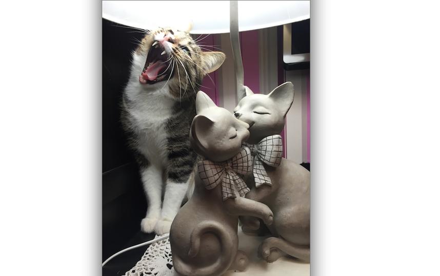 хочу представить Вам моего кота . Его зовут Дёма . Он очень энергичный , веселый , любит покушать и всегда радует нашу семью своей лаской и тем , какие иногда принимает позы. Фото Виктория Войнаровская