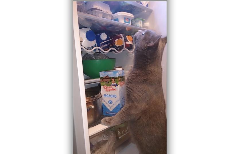 Я не маленький воришка, Но не просто на полки гляжу,  Хозяйка сидит на диете, А я за питанием слежу! Фото Юля