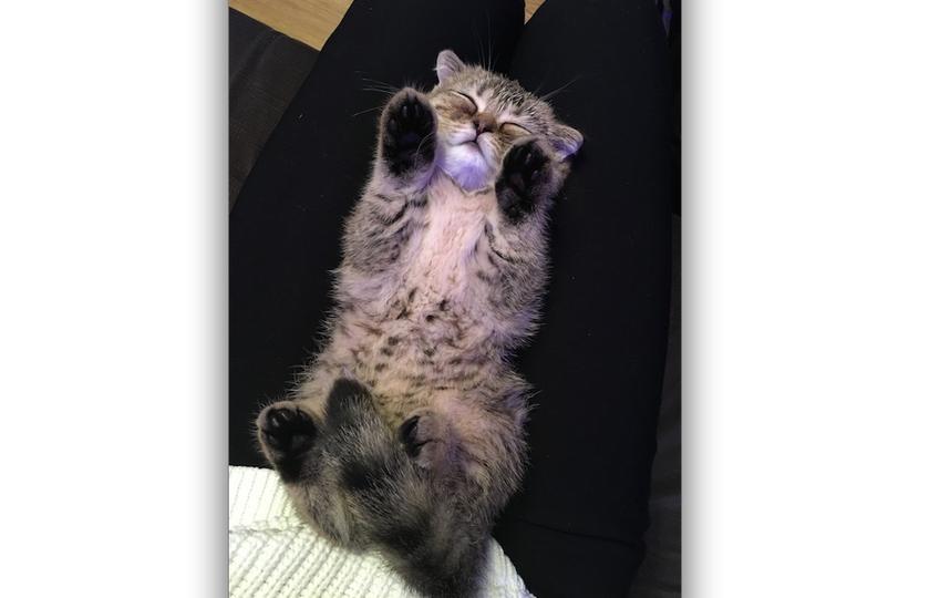 Веня, 3 месяца. спит без задних лап. Фото Елена