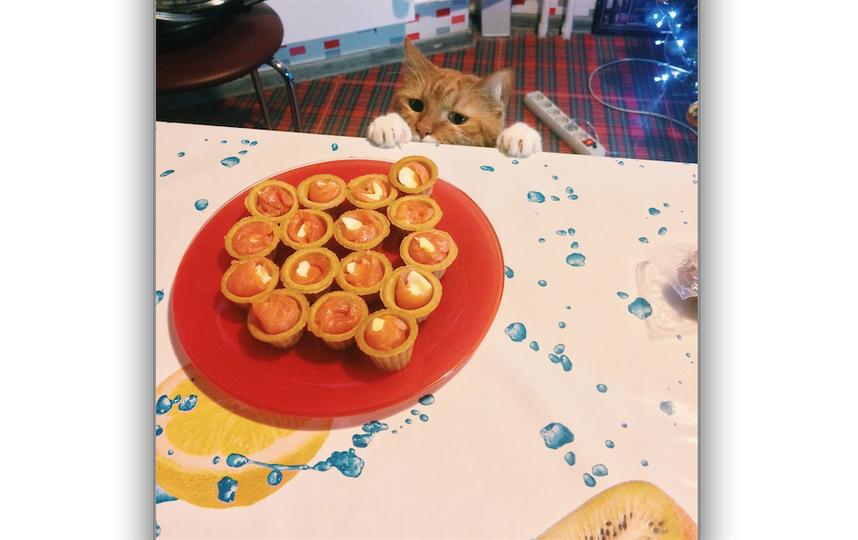 Мой кот Цезарь, уж очень любит быть во главе стола) Царь, он и есть царь! Фото Даша