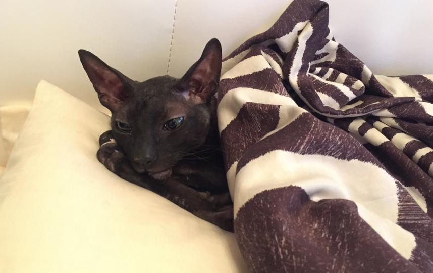 Очень самодостаточный Котик породы Корниш рекс. Его зовут Винфред. Фото Ирина