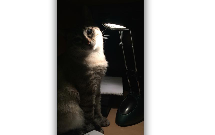 Наш кот Том всегда в центре внимания. Фото Елена