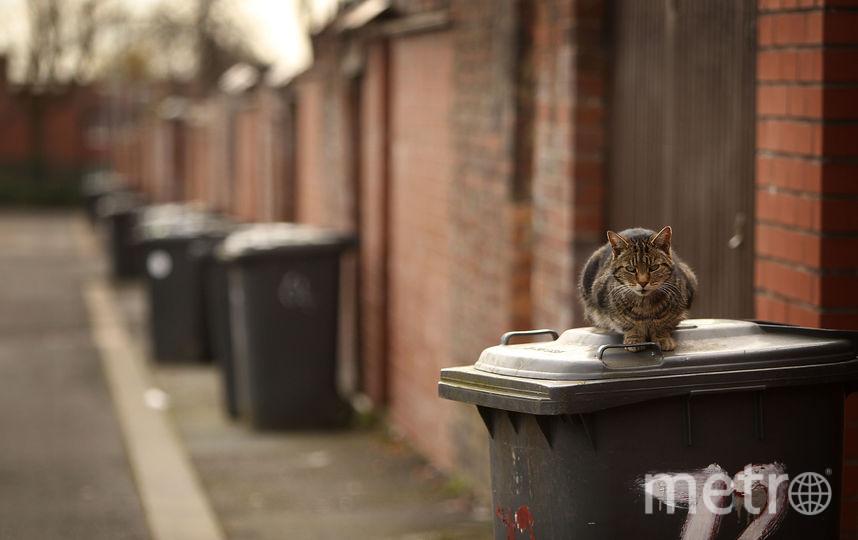 Уличный кот. Фото Getty