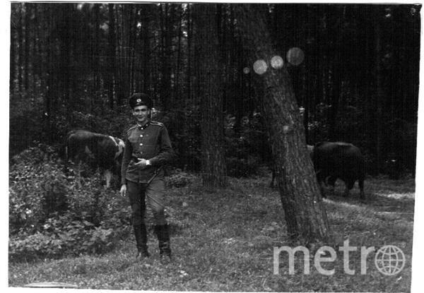 Это мой папа в 1984 году был дежурным по КПП в учебном центре и крутит хвосты быкам. Хорошее дежурство!!! Фото Анжела Зражевская
