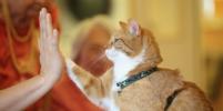 Пассажирам с кошками предоставят бизнес-класс в