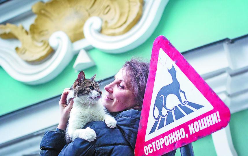 """Cегодня День кошек, поэтому коты празднуют не только наступление весны. Фото """"Metro"""""""