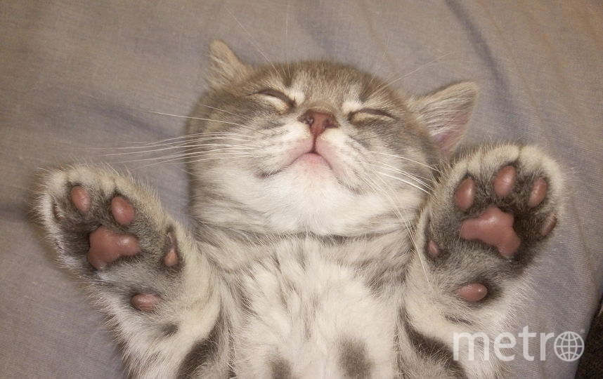 "Коты читателей Metro. Фото ""Metro"""