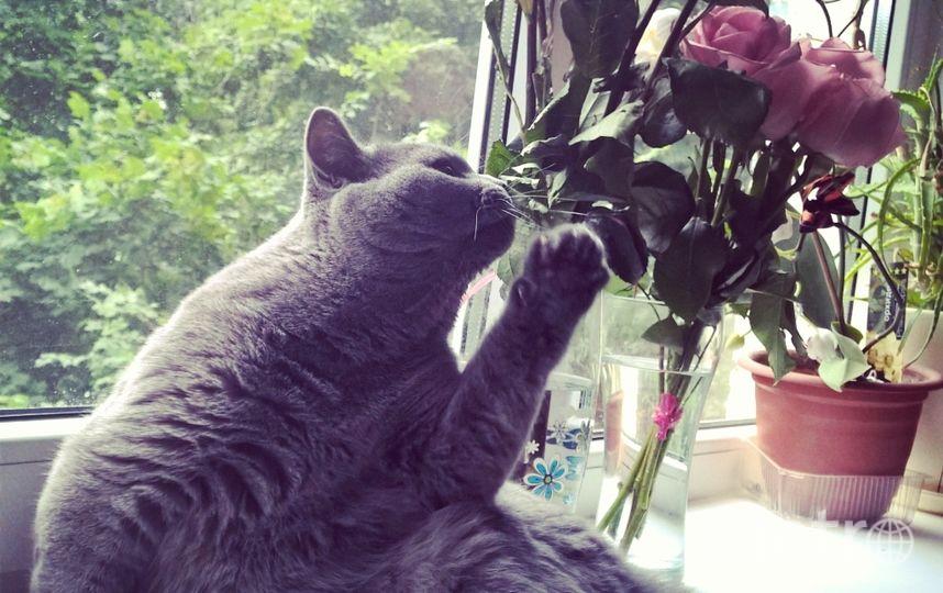 2 «Нашего кота зовут Тоша. Точнее – Атос Михалыч.  Он очень романтичная натура, любит цветы и умеет с ними позировать для фото». Фото прислала Екатерина Галкова.