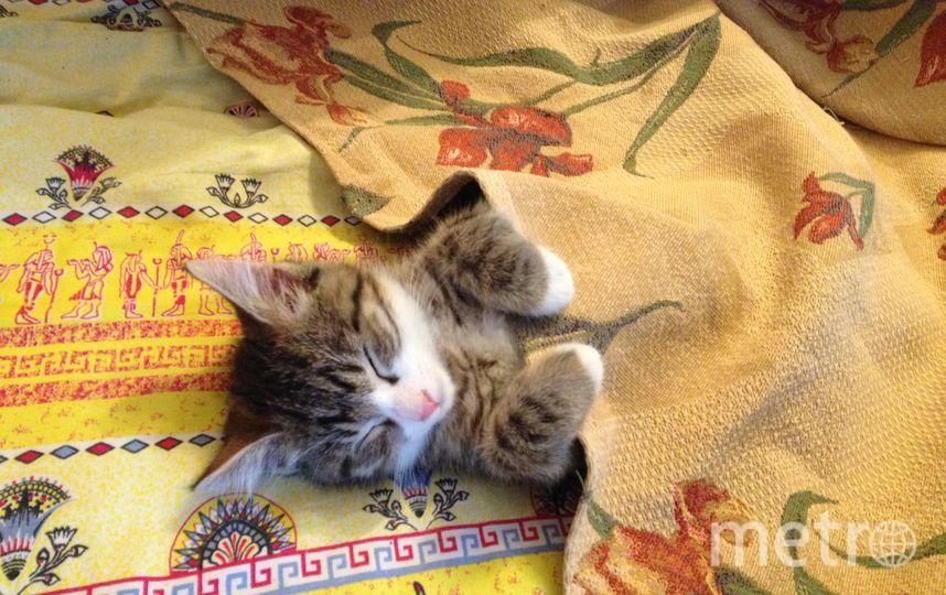 """4 «Нашего кота зовут   Монитор (Моня).  Нашли его в подвале. Моня очень любит спать на нашей кровати». Фото прислал Михаил. Фото """"Metro"""""""
