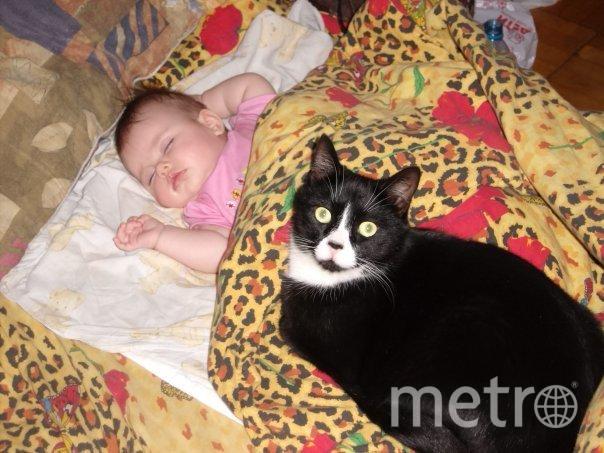Коты читателей Metro.