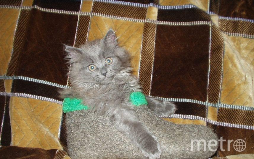 Кот Кузя носит...валенок. Фото Хозяйка: Ирина