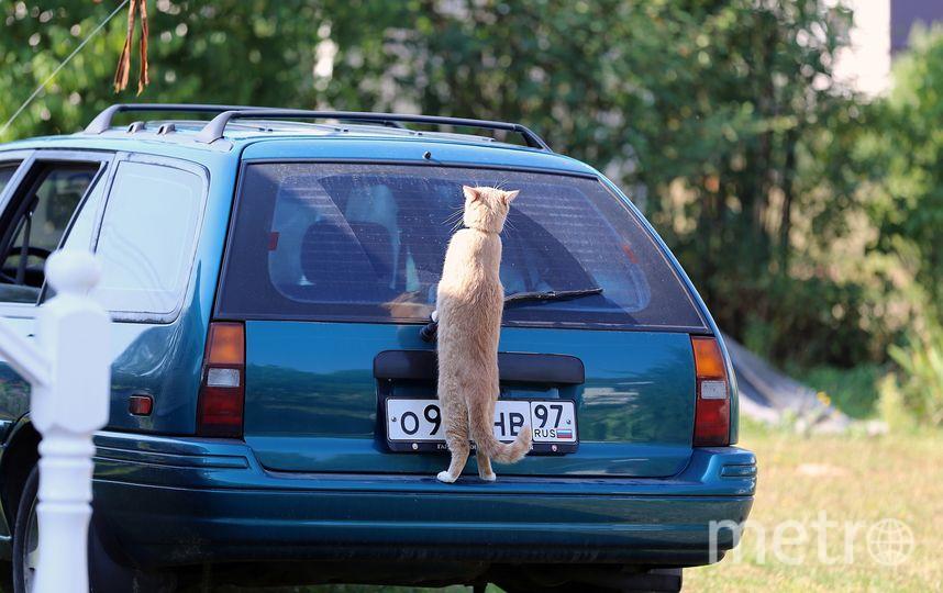 Кошка Тишка  предпочитает автомобиль. Фото Хозяин: Степан