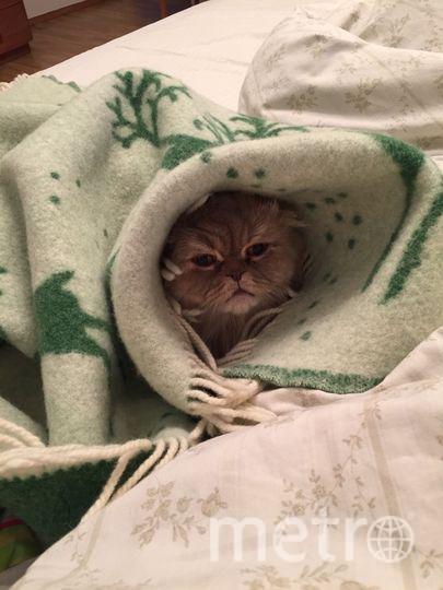 Кот Ваня знает, как согреваться. Фото Хозяйка: Елена