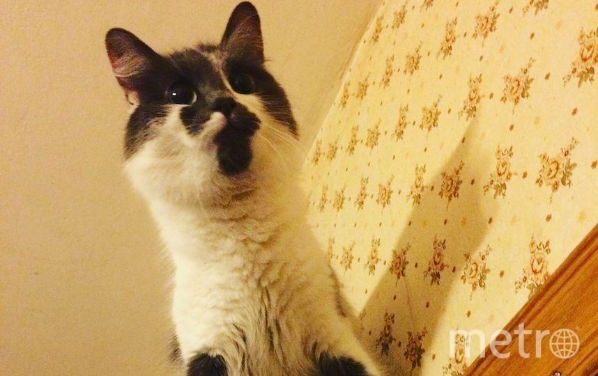 Кошка Анфиса любит экстрим и высоту. Фото Хозяйка: Анна