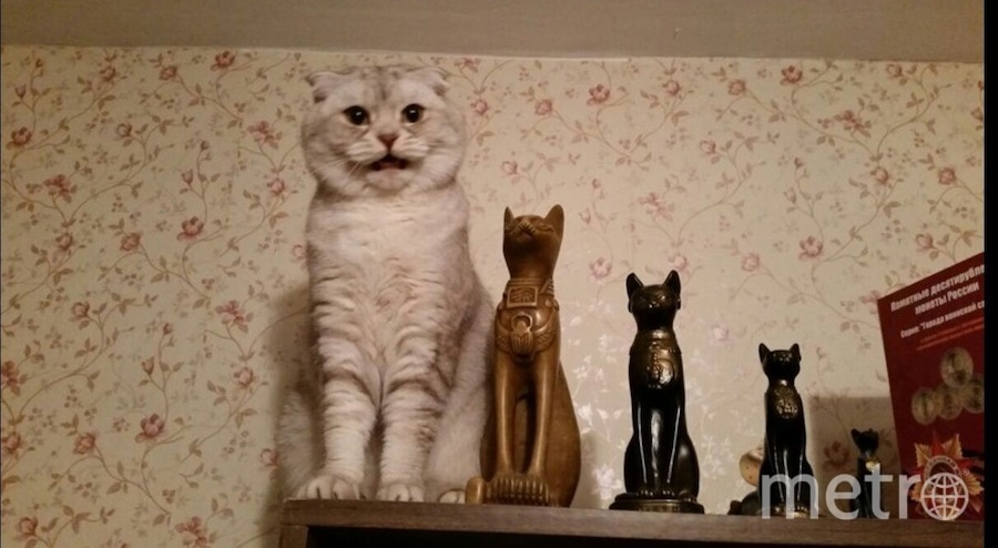Кошка Боня улыбается, как человек. Фото Хозяйка: Александра