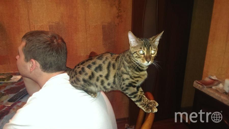 Кот Тошка любит сидеть... удобно. Фото Хозяйка: Елизавета