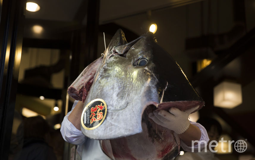Больше 14 тонн тунца «замерзло» попути вПетербург